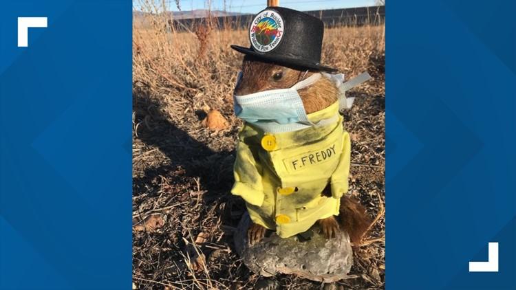 Flatiron Freddy, Boulder's marmot prognosticator, predicts 6 more weeks of winter