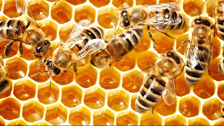 What bees do during the winter