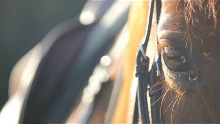 horse eye horses close up 1