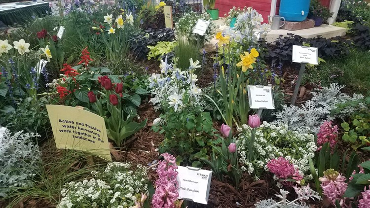 Flowers at 59th Annual Garden and Home Show. Photo Credit: Amanda Kesting, 9NEWS