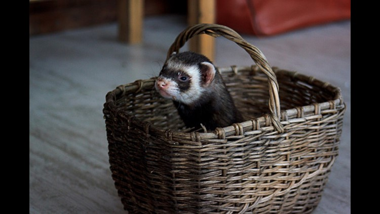 Don't mail a live ferret (and other helpful life tips