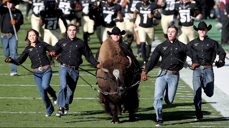 Ralphie CU Colorado Buffaloes Folsom Field