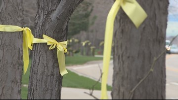 Why there are yellow ribbons tied to trees along a Longmont road