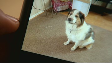 Dave the dog goes missing after his owner is seriously injured in car crash on E-470
