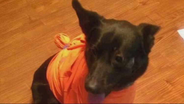 A dog that two people claimed to own was returned to a St. Louis man who had previously had her microchipped.
