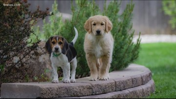 You need to follow puppy best friends Flip and Hudson on social media