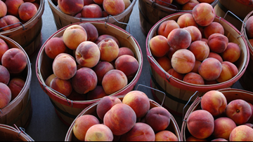 Snow is less than peachy but great for Palisade peaches