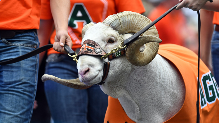 Cam the Ram cropped