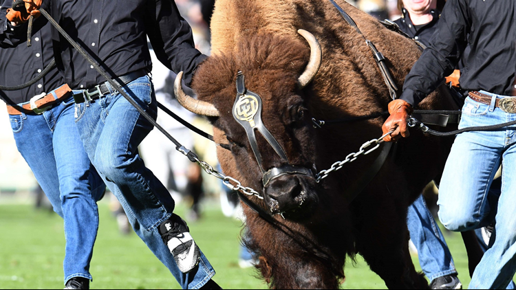 Colorado Buffaloes Ralphie CU