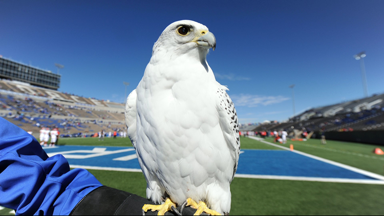 Air Force Academy Falcon Daytime