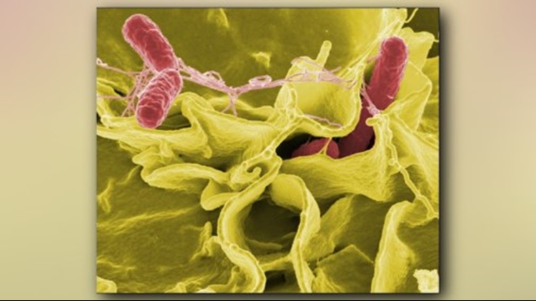 82 cases of Salmonella found in 14 Colorado counties