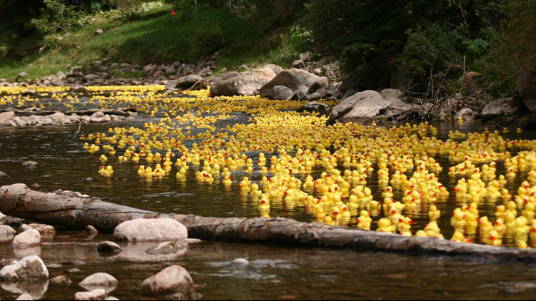 Vail Ruck Race rubber ducks