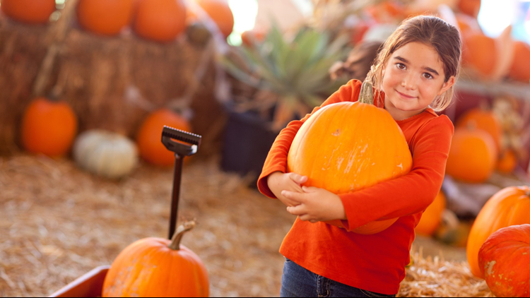 pumpkin patch pumpkins kid happy