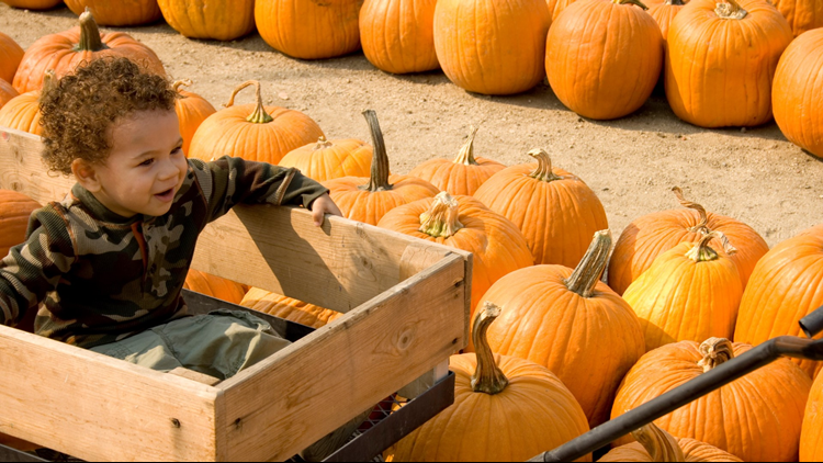 pumpkin patch boy in wagon