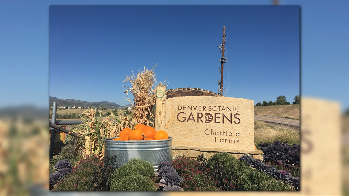 Navigate The Twists And Turns Of Denver Botanic Gardens Chatfield Farms 39 Annual Corn Maze
