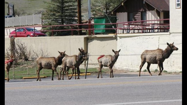 elk_Crossing_kelly_jensen_1538074879534.JPG