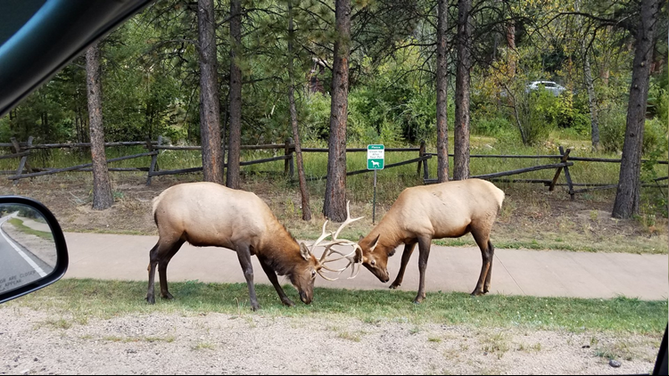 bruce_baldwin_elk_crossing_cropped_1538074879928.png