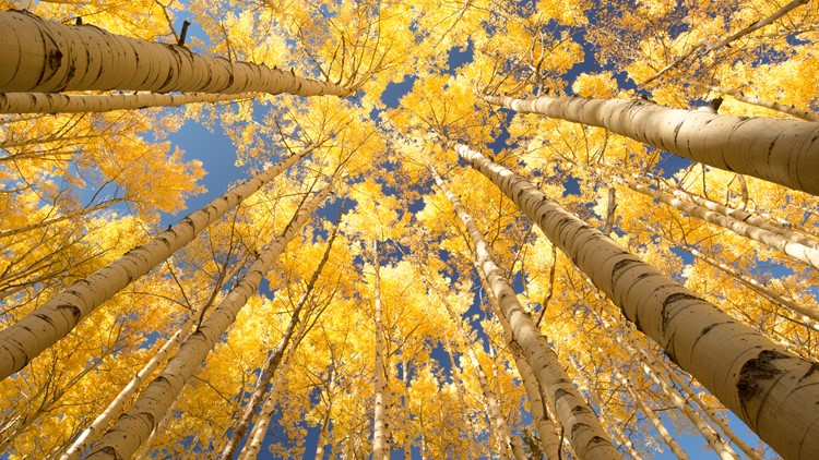 When and where to see the leaves change in Colorado