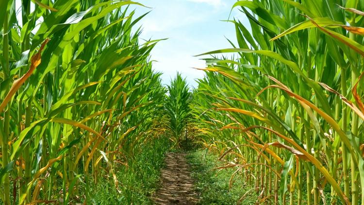 21 Colorado corn mazes to explore this autumn