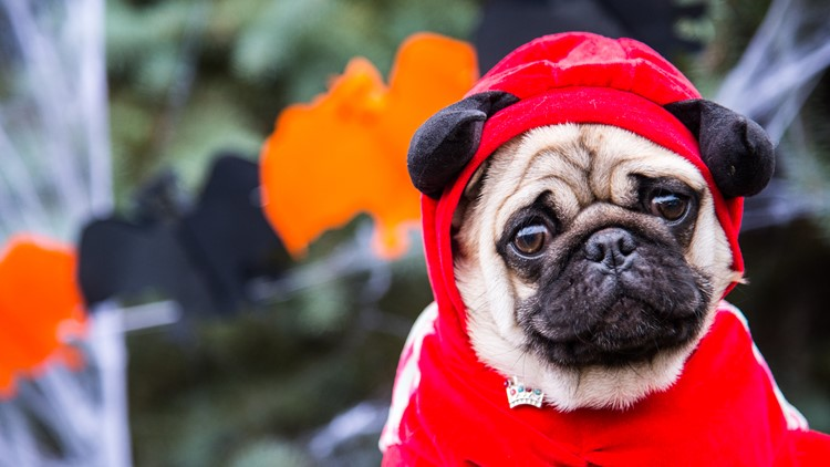 dog halloween costume pet parade fright fest