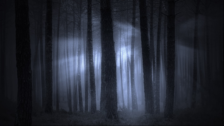 Spooky foggy forest halloween haunted