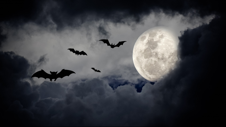 halloween bats moon clouds sky haunted