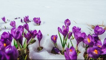 As temperatures plummet, take precautions to protect tender vegetation