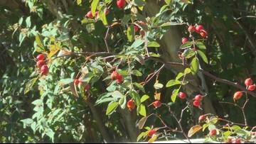 Proctor's Garden: Salvage your summer bulbs