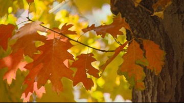 Denver's fall colors will stick around for a couple more weeks