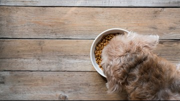 Tips on making healthy homemade dog food