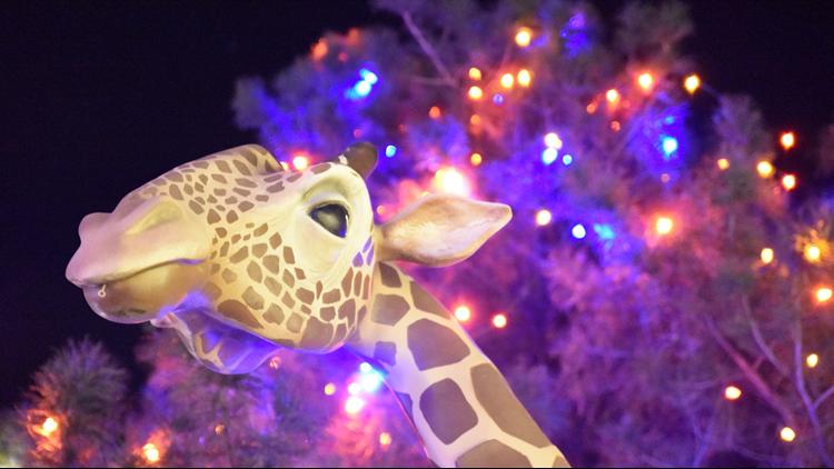 Cheyenne Mountain Zoo giraffe Electric Safari