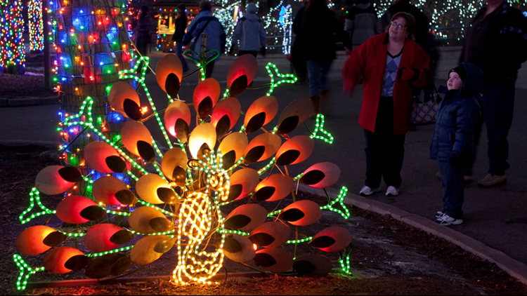 Denver Zoo Lights lighted peacock