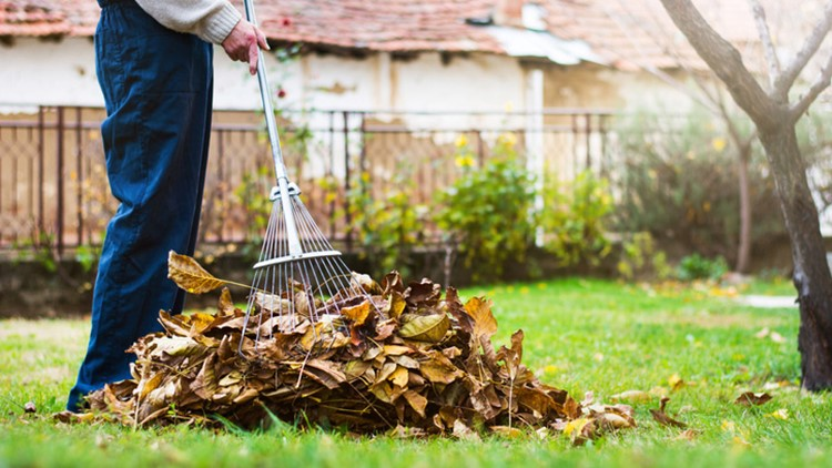 Five ways to turn fallen leaves into free fertilizer for your garden