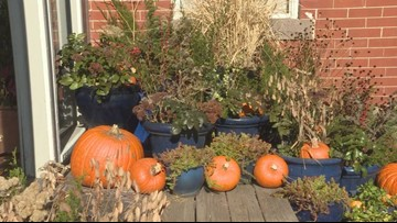 Creating Thanksgiving porch pots from your garden