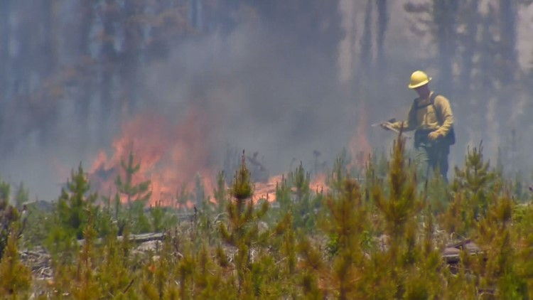 About half of all Coloradans live in areas at risk of wildfires, state forest service says