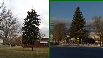 2 Colorado towns claim they have the tallest Christmas trees