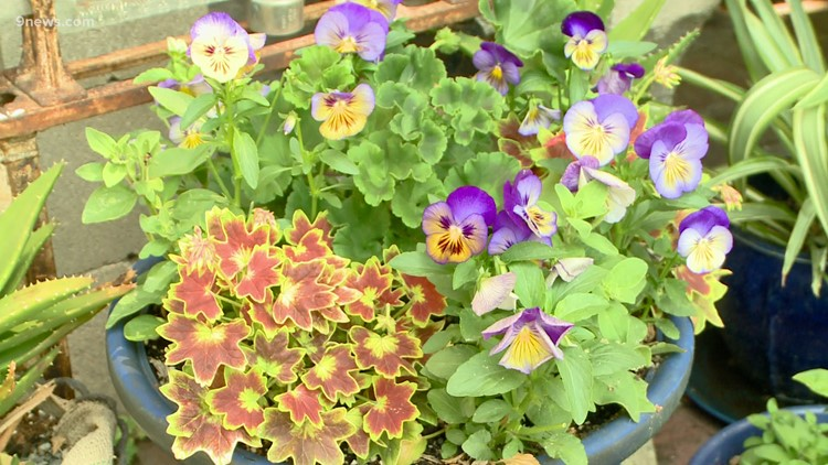 Fertilize your plants for beautiful results