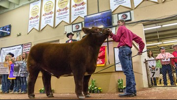 Record-setting year at the Junior Livestock Auction