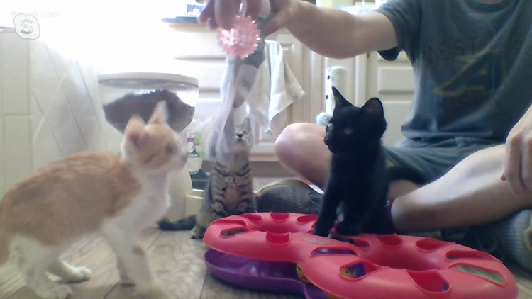Petline 9: Kittens available for adoption