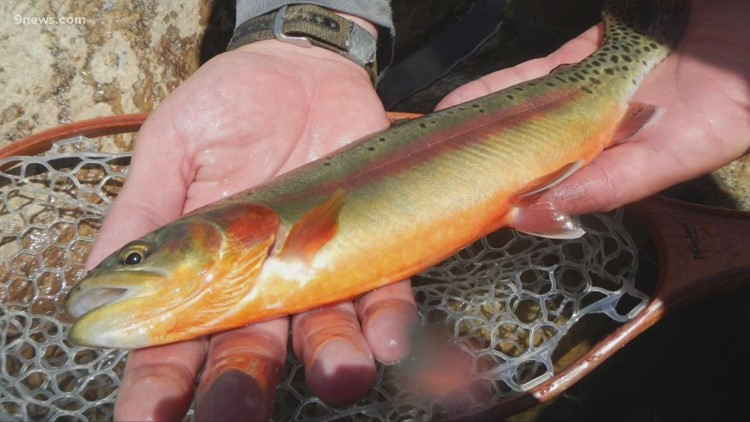 You'll soon be able to catch golden trout at this Colorado state park