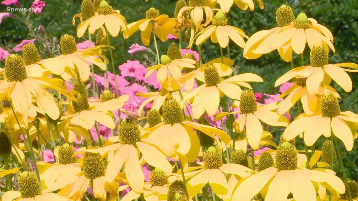 Proctor's Garden: So many daisies