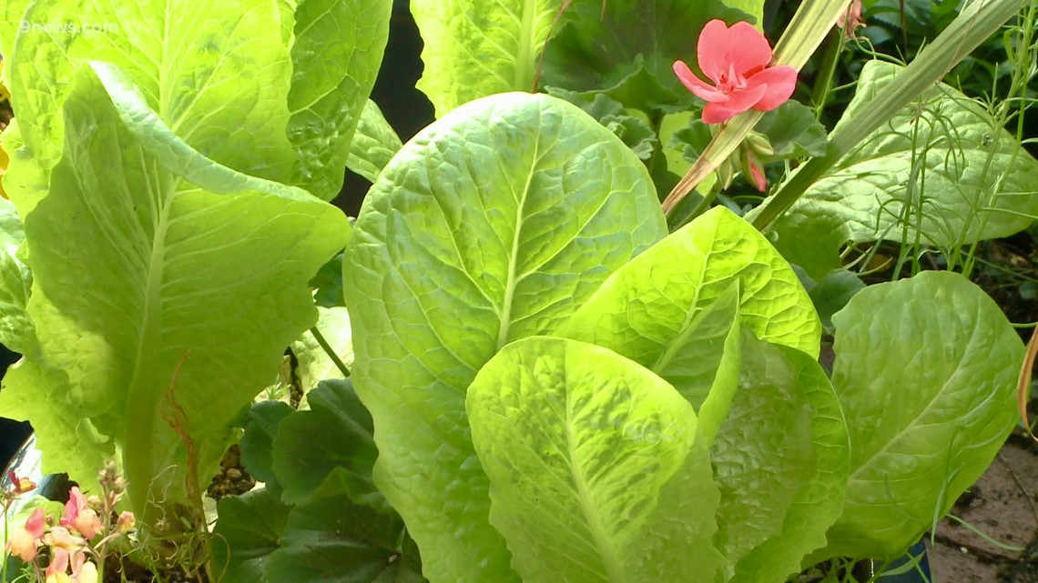 Proctor's Garden: Tips for selecting great foliage
