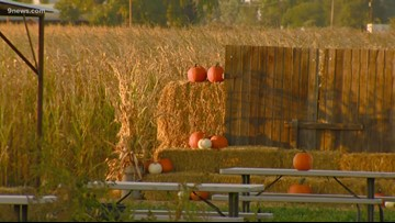This year, some people are having to wait a little longer for pumpkin farms to open