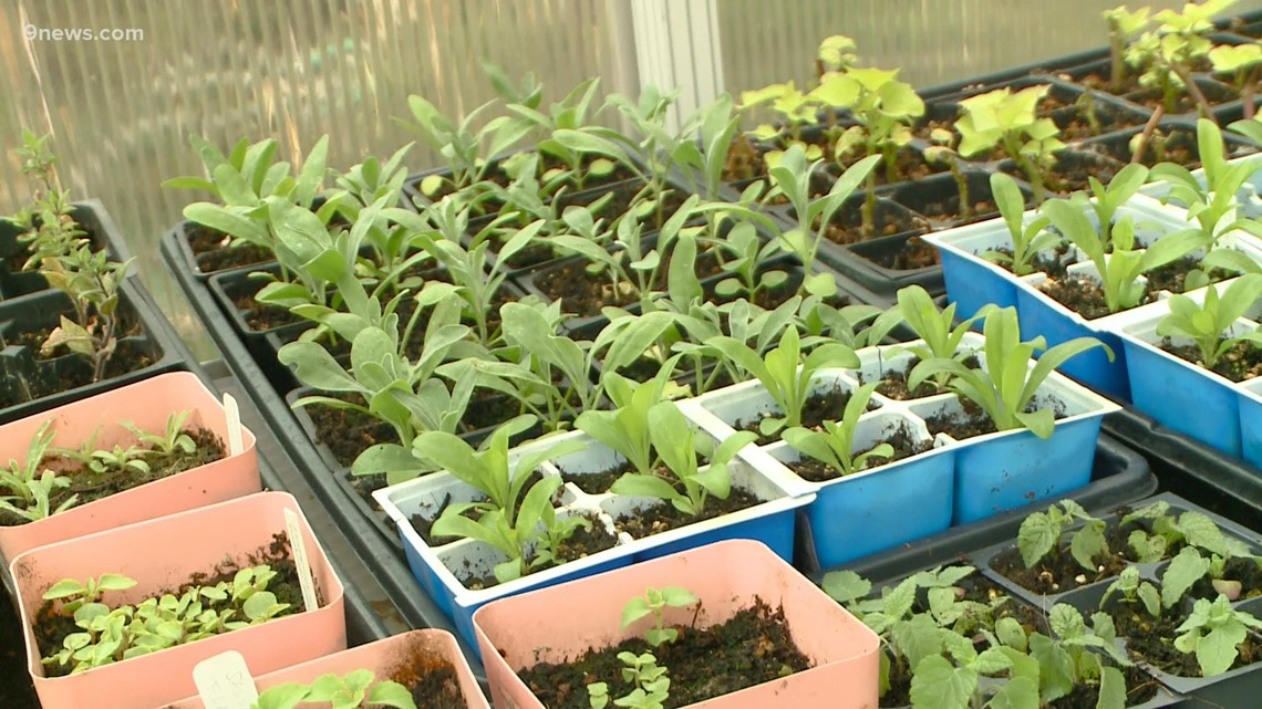 Proctor's Garden: Treat your seedlings right