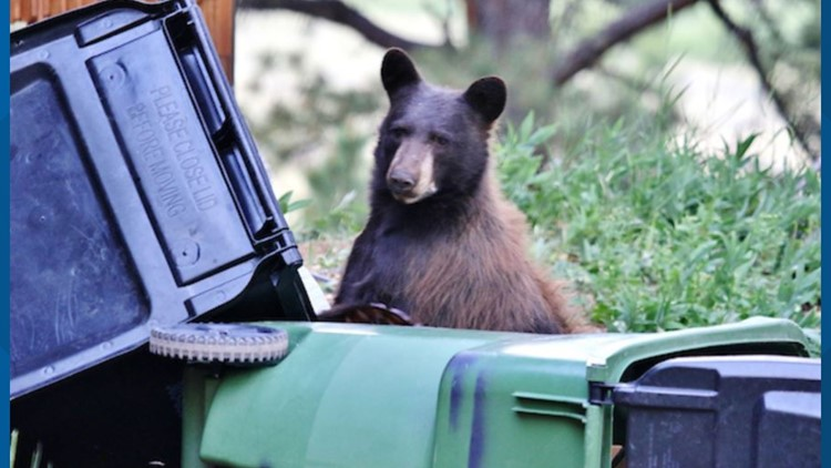 Bear climbs out of dumpster, attacks man in Aspen