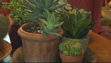 Proctor's Garden: Get savvy with succulents