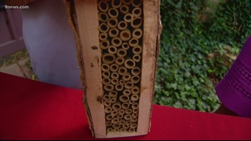 Bee hotels: How you can host bees in your yard