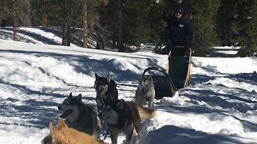 Coloradans can get a taste of the Iditarod experience close to home