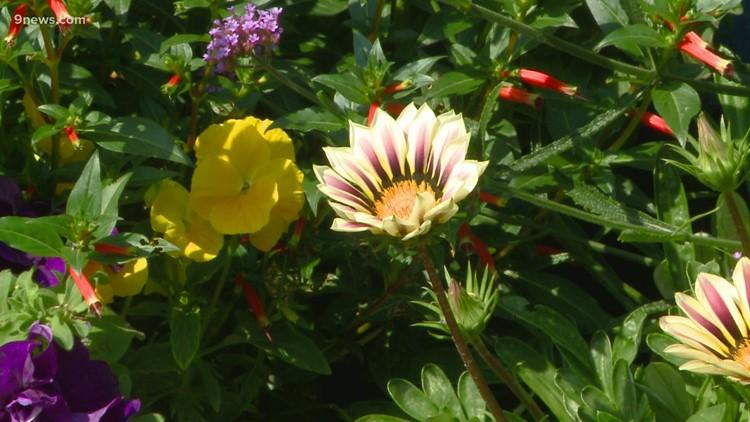 Proctor's Garden: Avoid common gardening mistakes