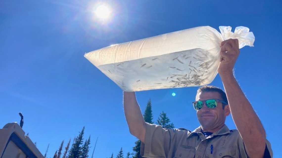 6,000 greenback cutthroat trout introduced into Clear Creek fork